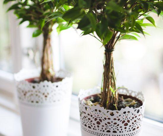 Indoor plant image